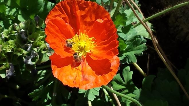 Specious Blossom 2