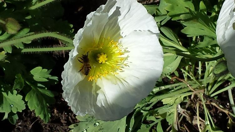 Specious Blossom 3