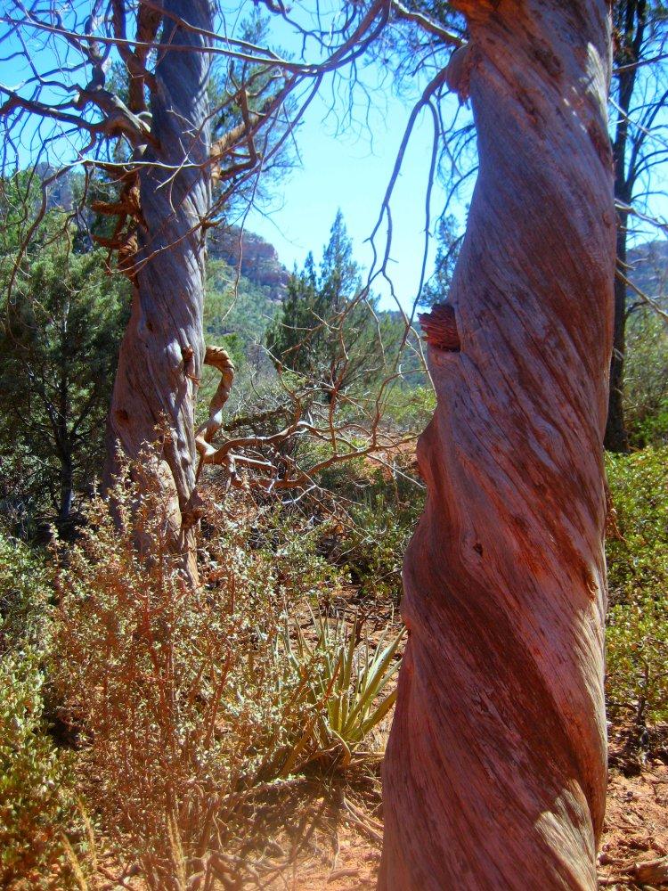 Arizona 2014 105