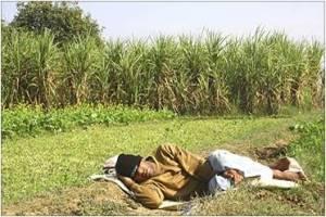 Man sleeping in the farm