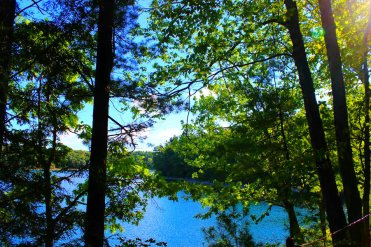 Early morning at Walden Pond: Is this the morning that inspired Thoreau to write his poems?