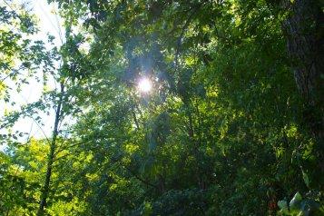 Sun peeking through the thick foliage