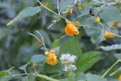 Specious blossoms